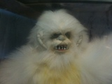 Star Wars Luke Skywalker vs. Wampa Collector Series (12 Inch) thumbnail 1